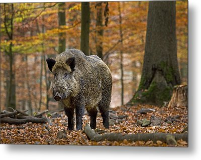 Metal Print featuring the photograph 121213p283 by Arterra Picture Library