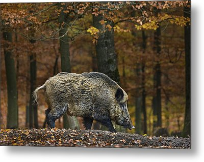 Metal Print featuring the photograph 121213p284 by Arterra Picture Library