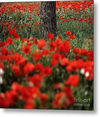Field Of Poppies Metal Print by Bernard Jaubert