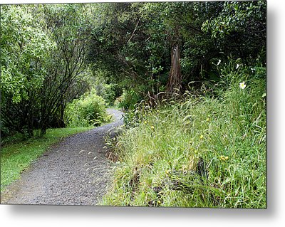 Forest Trail Metal Print by Les Cunliffe