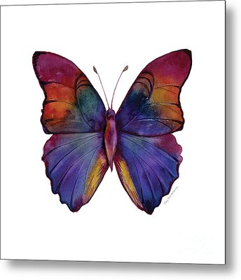 13 Narcissus Butterfly Metal Print by Amy Kirkpatrick