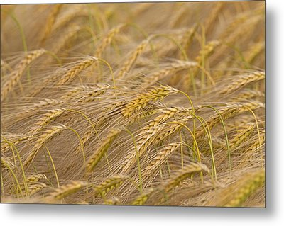 Metal Print featuring the photograph 130109p155 by Arterra Picture Library