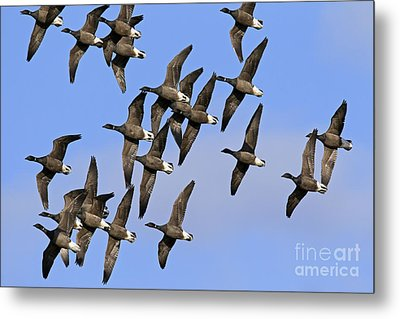Metal Print featuring the photograph 130109p166 by Arterra Picture Library