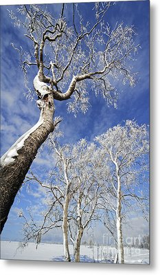 Metal Print featuring the photograph 130201p343 by Arterra Picture Library