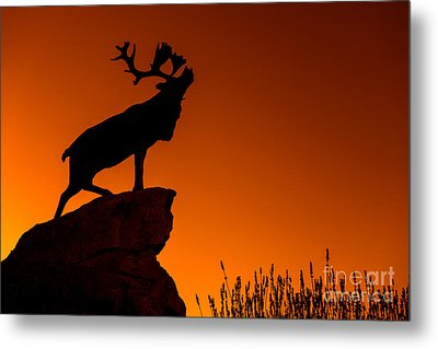 130918p141 Metal Print by Arterra Picture Library