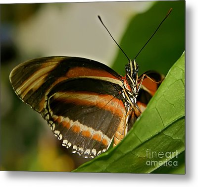 Metal Print featuring the photograph Butterfly by Olga Hamilton