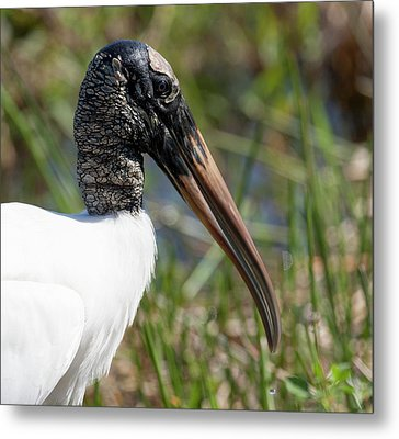 Usa, Florida, Everglades National Park Metal Print by Jaynes Gallery