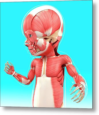 Baby's Muscular System Metal Print by Pixologicstudio
