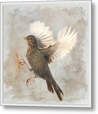 Bird  Metal Print by Heike Hultsch