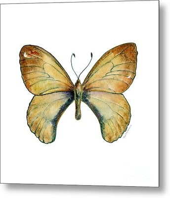 15 Clouded Apollo Butterfly Metal Print by Amy Kirkpatrick