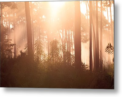 Foggy Sunrise At Long Pine Key Metal Print by Jonathan Gewirtz
