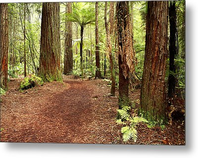 Forest Metal Print by Les Cunliffe