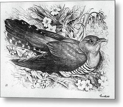 Blackburn Birds, 1895 Metal Print by Granger