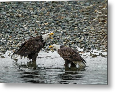 Usa, Alaska, Chilkat Bald Eagle Preserve Metal Print by Jaynes Gallery