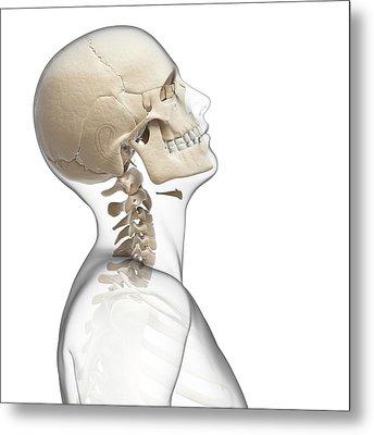 Human Skull And Neck Bones Metal Print