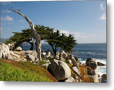 Metal Print featuring the photograph 17 Mile Drive  by Vinnie Oakes