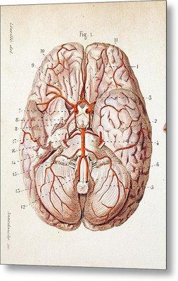 1840 Historical Image Brain Blood Supply Metal Print