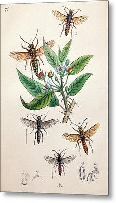 1845 Obadiah Westwood Insect Painting Metal Print