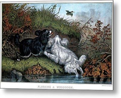 1860s Two Spaniel Dogs Flushing Metal Print
