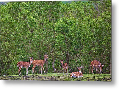 India, West Bengal, Sunderbans National Metal Print by Connie Bransilver