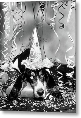 1950s Funny Basset Hound Wearing Party Metal Print