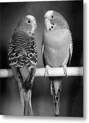 1960s Pair Of Parakeets Perched Metal Print