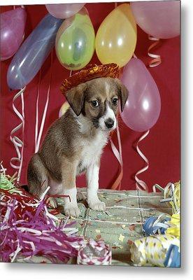 1960s Sad Puppy Wearing Party Hat Metal Print