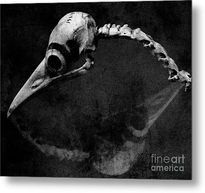 #19615 Metal Print by Sharon Coty
