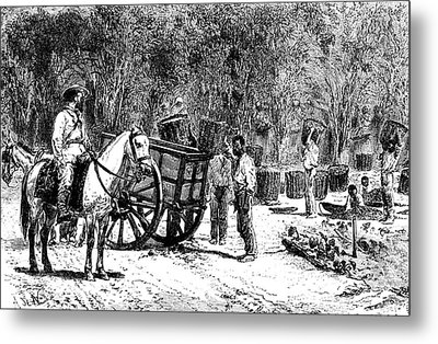 19th Century Coffee Farming Metal Print by Collection Abecasis