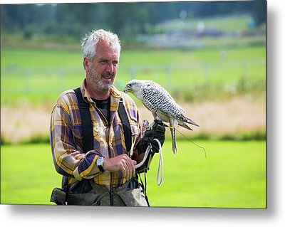 A Falconry Display Metal Print by Ashley Cooper