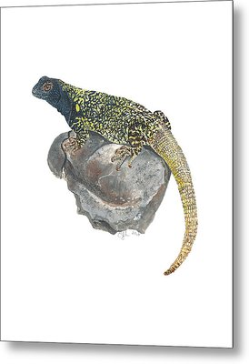 Argentine Lizard Metal Print by Cindy Hitchcock