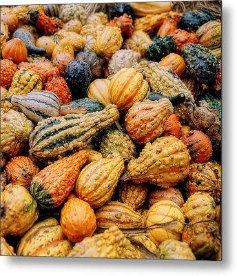 Autumn Gourds Metal Print by Joann Vitali