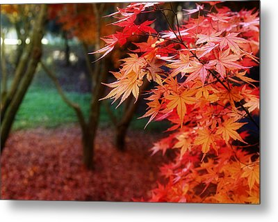 Autumnal Forest Metal Print by Les Cunliffe