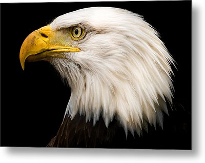 Bald Eagle Metal Print by Tracy Munson