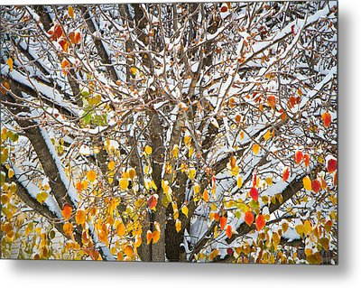 Battle Of The Seasons Metal Print by Annette Hugen