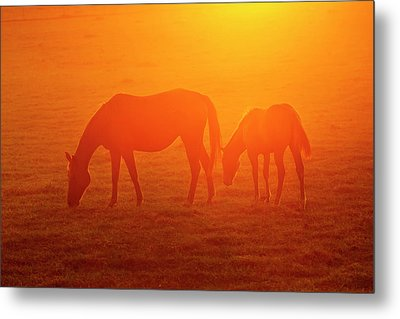 Bay-colored Riding Horses On Ranch Metal Print by Larry Ditto