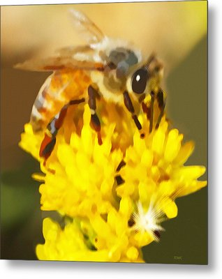 Bee On A Yellow Flower Metal Print by Marian Cates