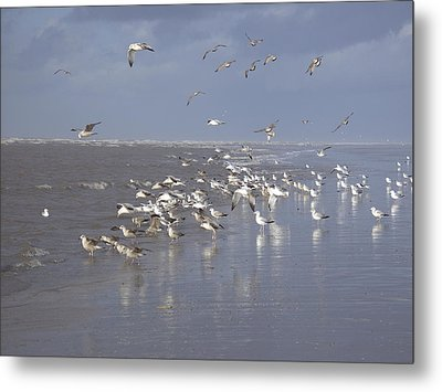 Birds At The Beach Metal Print
