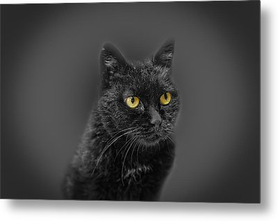 Black Cat Metal Print by Peter Lakomy