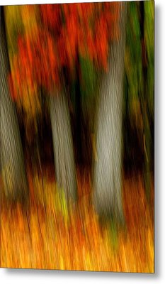 Blazing In The Woods Metal Print