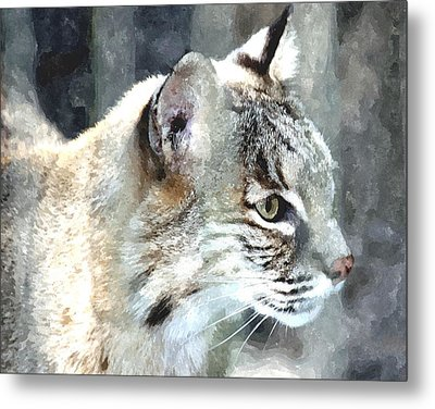Bobcat Metal Print by Barry Spears