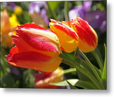 Bowing Tulips Metal Print by Rona Black