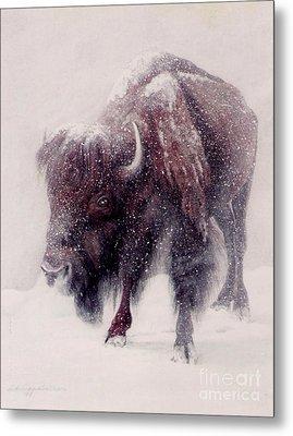 Buffalo Blizzard Metal Print by DiDi Higginbotham