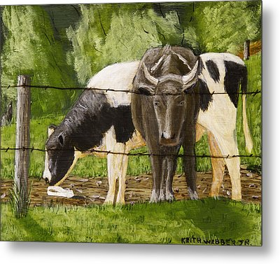 Bull And Cow Spring Farm Field  Metal Print by Keith Webber Jr