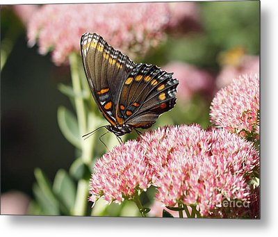 Butterfly Metal Print by Denise Pohl
