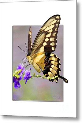 Metal Print featuring the photograph Butterfly by Mariarosa Rockefeller