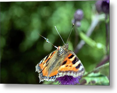 Butterfly Radar Tagging Metal Print by Louise Murray