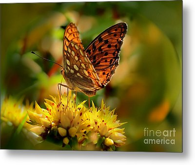 Butterfly Metal Print by Sylvia  Niklasson