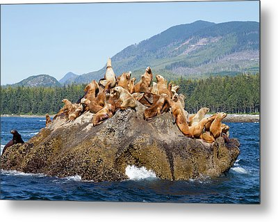 Canada, Pacific Rim National Park Metal Print by Jamie and Judy Wild