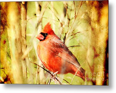 Metal Print featuring the photograph Cardinal by Trina  Ansel